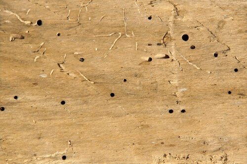 woodworm treatment Swindon